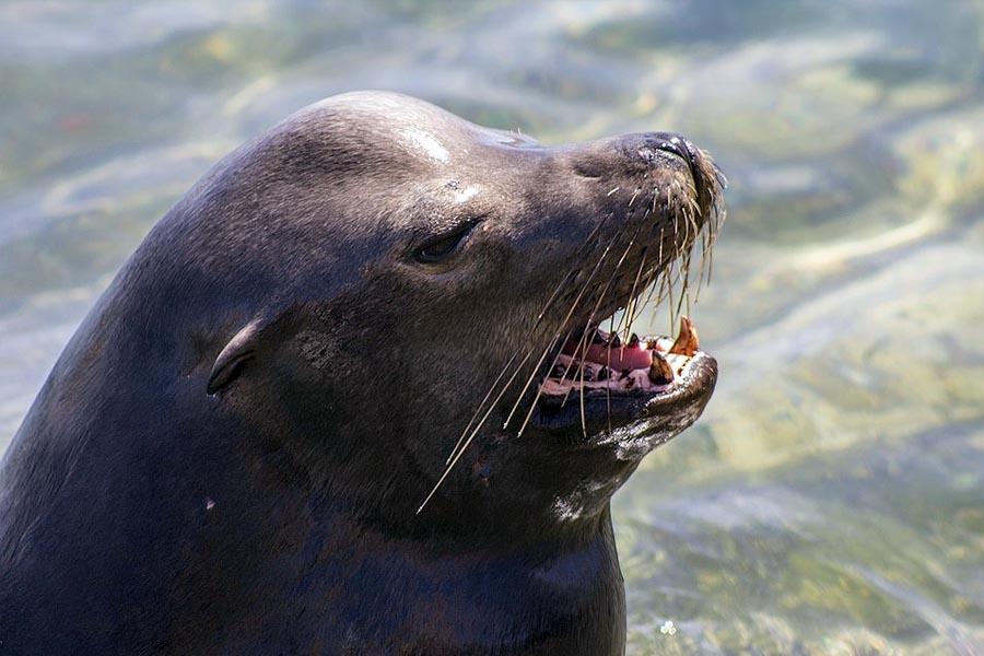 Lobos marinos cabo san lucas