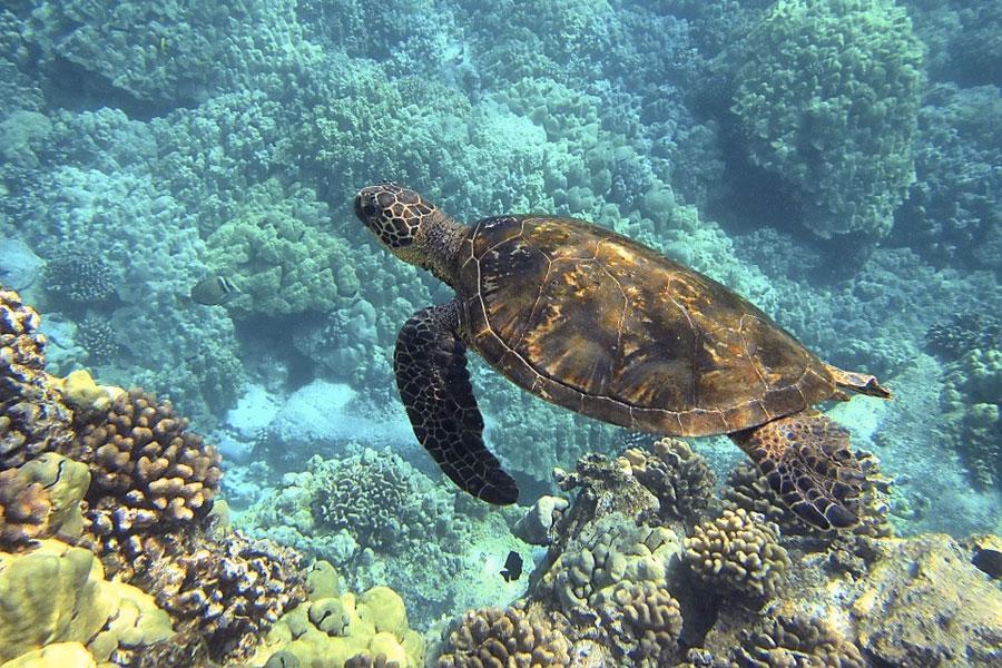 Bahia Tortuga Hawaii